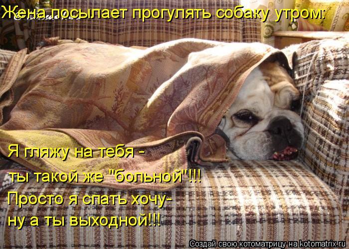 """Котоматрица: Жена посылает прогулять собаку утром: Я гляжу на тебя - Просто я спать хочу- ты такой же """"больной""""!!! ну а ты выходной!!!"""