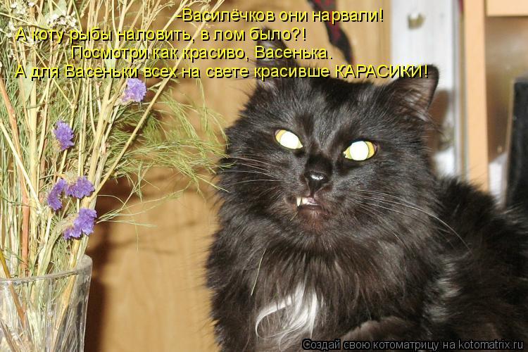 Котоматрица: А коту рыбы наловить, в лом было?! -Василёчков они нарвали!  Посмотри как красиво, Васенька.  А для Васеньки всех на свете красивше КАРАСИКИ!