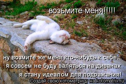 Котоматрица: возьмите меня!!!!! ну возмите же меня кто-нибудь к себе... я совсем не буду валяться на диванах я стану идеалом для подражания!