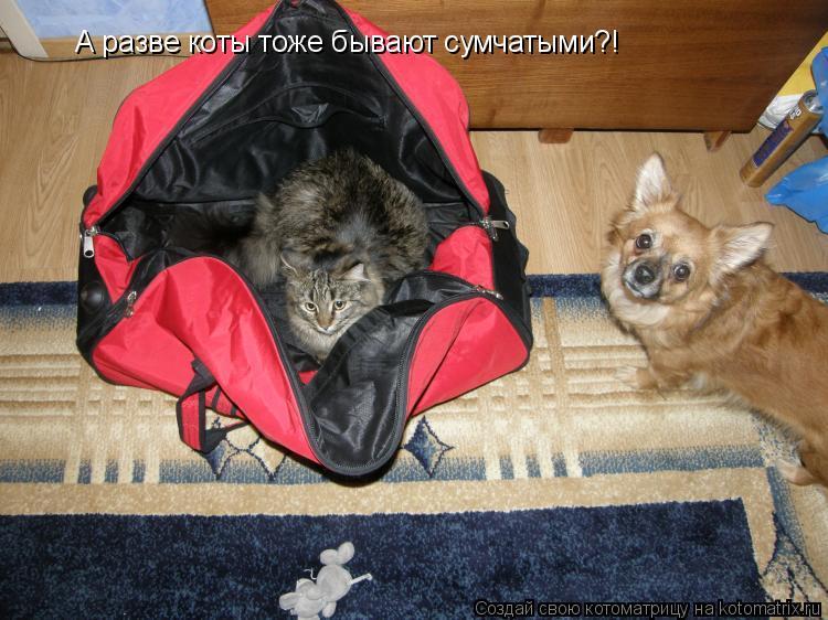 Котоматрица: А разве коты тоже бывают сумчатыми?!