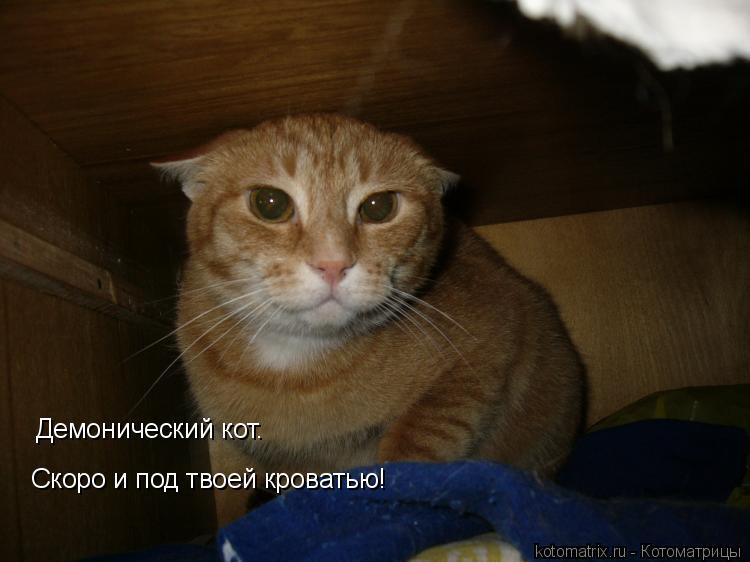 Котоматрица: Демонический кот. Скоро и под твоей кроватью!