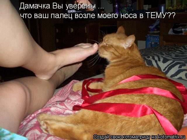 Котоматрица: Дамачка Вы уверены ... что ваш палец возле моего носа в ТЕМУ??