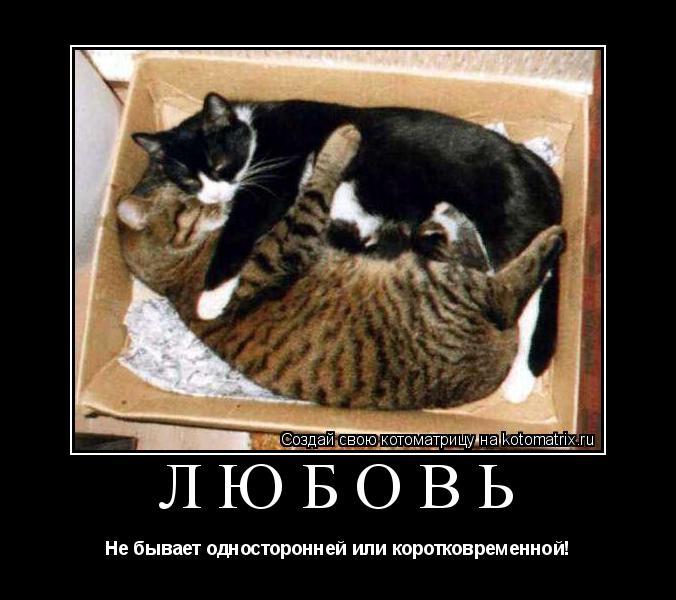 Котоматрица: Любовь Не бывает односторонней или коротковременной!