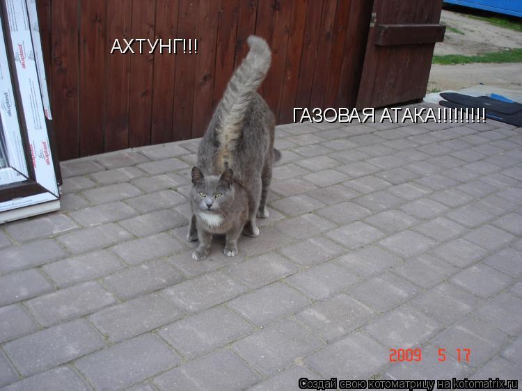 Котоматрица: АХТУНГ!!! ГАЗОВАЯ АТАКА!!!!!!!!!
