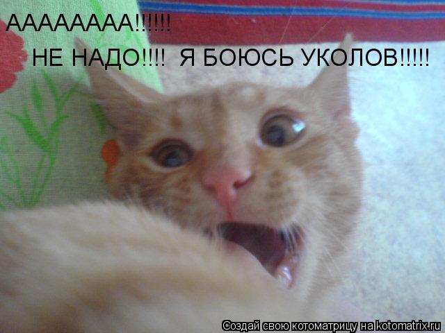 Котоматрица: АААААААА!!!!!!  НЕ НАДО!!!!  Я БОЮСЬ УКОЛОВ!!!!!