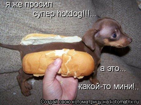 Котоматрица: я же просил а это... какой-то мини !.. супер hotdog!!!...