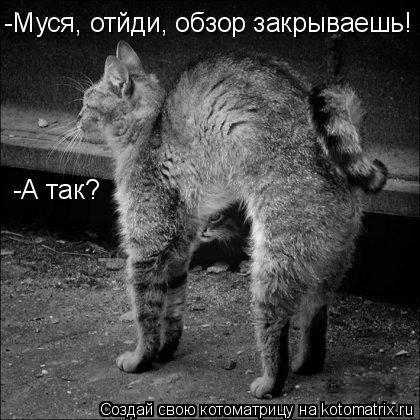 Котоматрица: -Муся, отйди, обзор закрываешь! -А так?