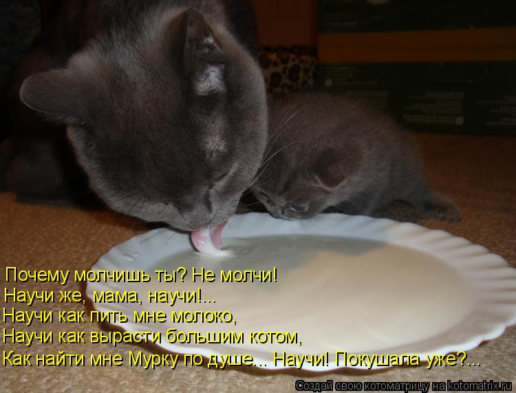 Котоматрица: Почему молчишь ты? Не молчи! Научи же, мама, научи!... Научи как пить мне молоко, Научи как вырасти большим котом, Как найти мне Мурку по душе...