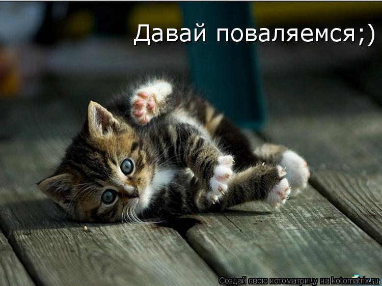 Котоматрица: Давай поваляемся;)