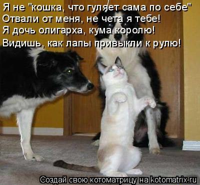 """Котоматрица: Я не """"кошка, что гуляет сама по себе"""" Отвали от меня, не чета я тебе! Я дочь олигарха, кума королю! Видишь, как лапы привыкли к рулю!"""