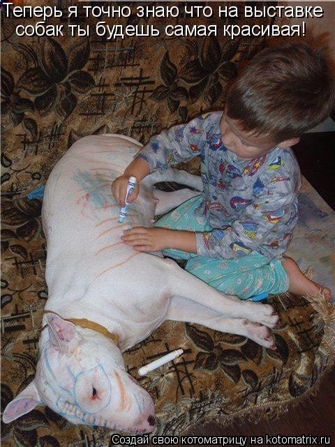 Котоматрица: Теперь я точно знаю что на выставке  собак ты будешь самая красивая!