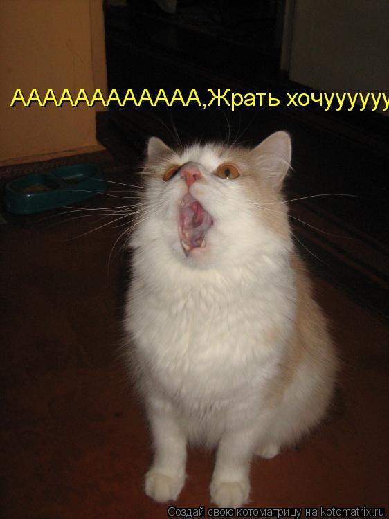 Котоматрица: АААААААААААА,Жрать хочуууууууу!!!!!!!!!