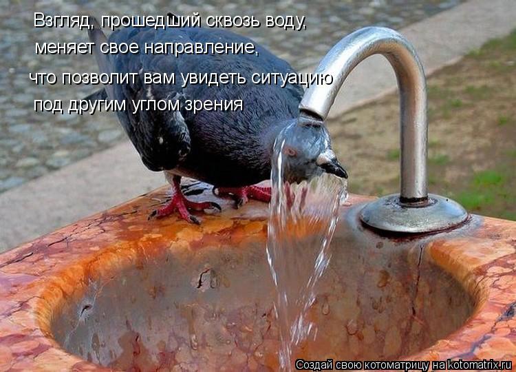 Котоматрица: Взгляд, прошедший сквозь воду, что позволит вам увидеть ситуацию меняет свое направление, под другим углом зрения