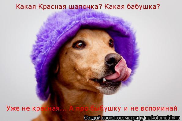 Котоматрица: Какая Красная шапочка? Какая бабушка?  Уже не красная... А про быбушку и не вспоминай