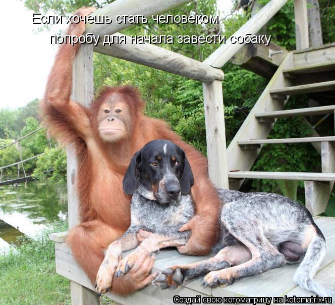 Котоматрица: Если хочешь стать человеком попробу для начала завести собаку