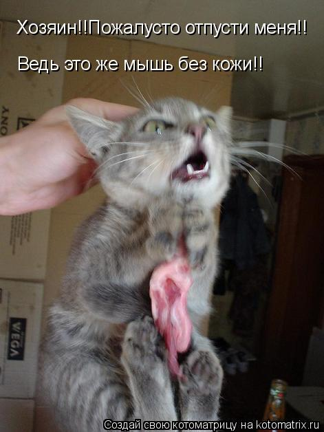 Котоматрица: Хозяин!!Пожалусто отпусти меня!!Ведь это же мышь без кожи!! Хозяин!!Пожалусто отпусти меня!! Ведь это же мышь без кожи!!