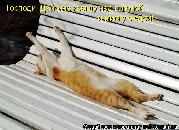 Котоматрица: Господи! Дай мне крышу над головой и миску с едой!