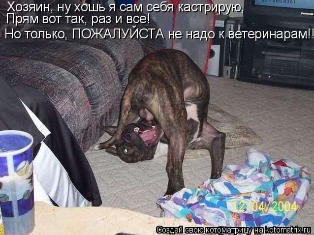 Котоматрица: Хозяин, ну хошь я сам себя кастрирую, Прям вот так, раз и все! Но только, ПОЖАЛУЙСТА не надо к ветеринарам!!!