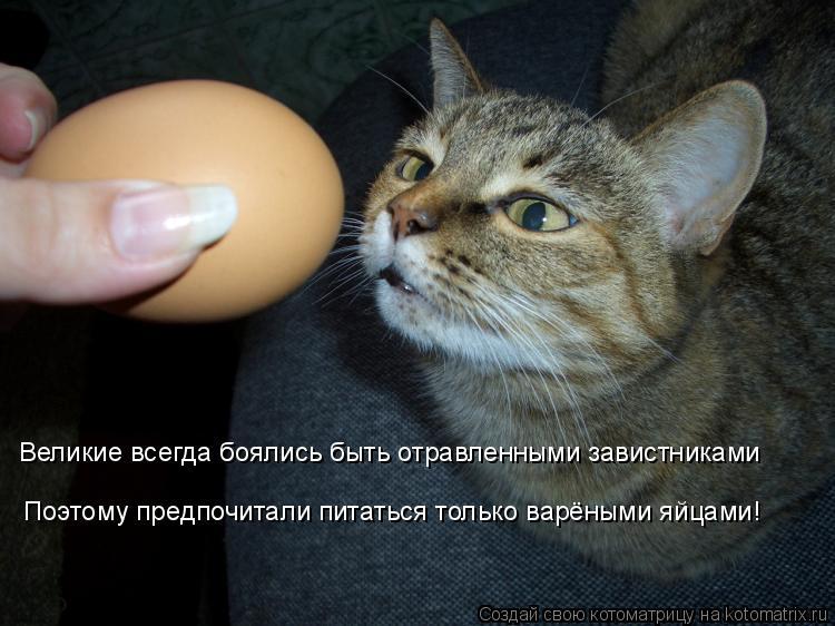 Котоматрица: Великие всегда боялись быть отравленными завистниками Поэтому предпочитали питаться только варёными яйцами!