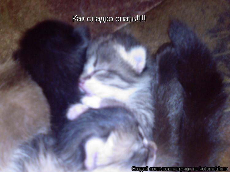 Котоматрица: Как сладко спать!!!!