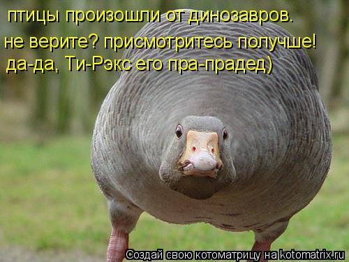 Котоматрица: птицы произошли от динозавров. не верите? присмотритесь получше! да-да, Ти-Рэкс его пра-прадед)