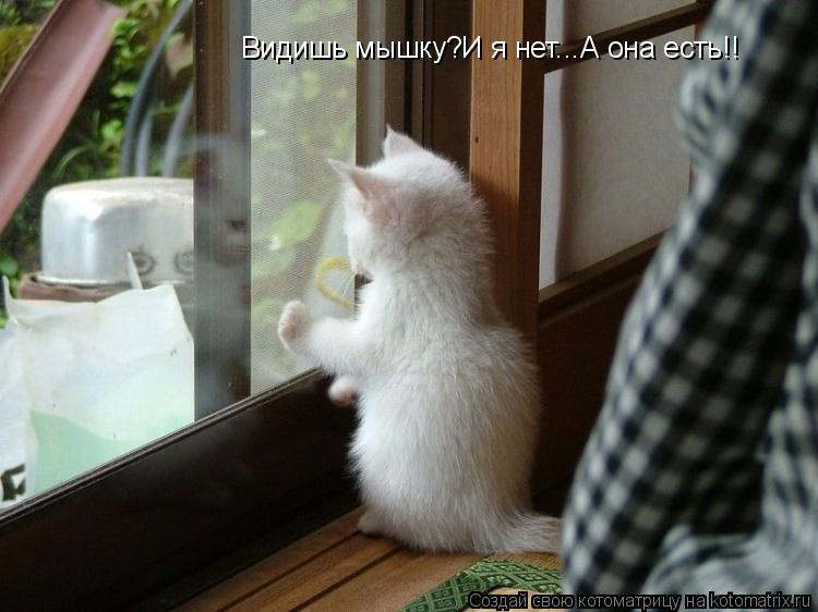 Котоматрица: Видишь мышку?И я нет...А она есть!!