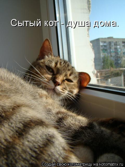 Котоматрица: Сытый кот - душа дома.