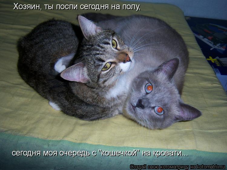 """Котоматрица: Хозяин, ты поспи сегодня на полу,  сегодня моя очередь с """"кошечкой"""" на кровати..."""