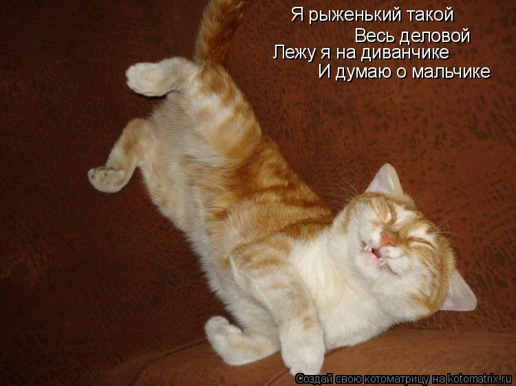 Котоматрица: Я рыженький такой Весь деловой Лежу я на диванчике И думаю о мальчике