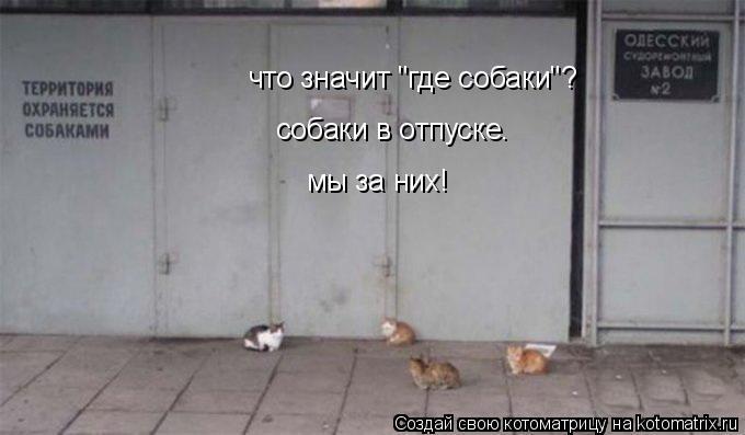 """Котоматрица: что значит """"где собаки""""? собаки в отпуске.  мы за них!"""