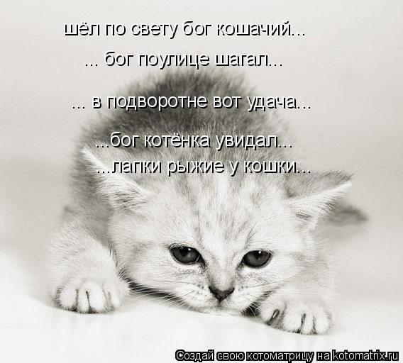 Котоматрица: шёл по свету бог кошачий... ... в подворотне вот удача... ...бог котёнка увидал... ... бог поулице шагал... ...лапки рыжие у кошки...