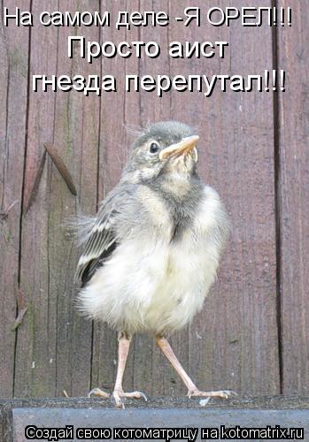 Котоматрица: На самом деле -Я ОРЕЛ!!! Просто аист гнезда перепутал!!!