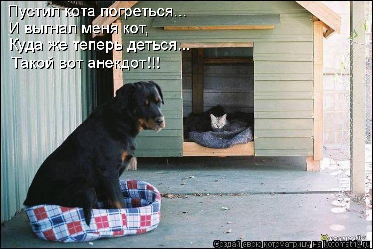 Котоматрица: Пустил кота погреться... И выгнал меня кот, Куда же теперь деться... Такой вот анекдот!!!
