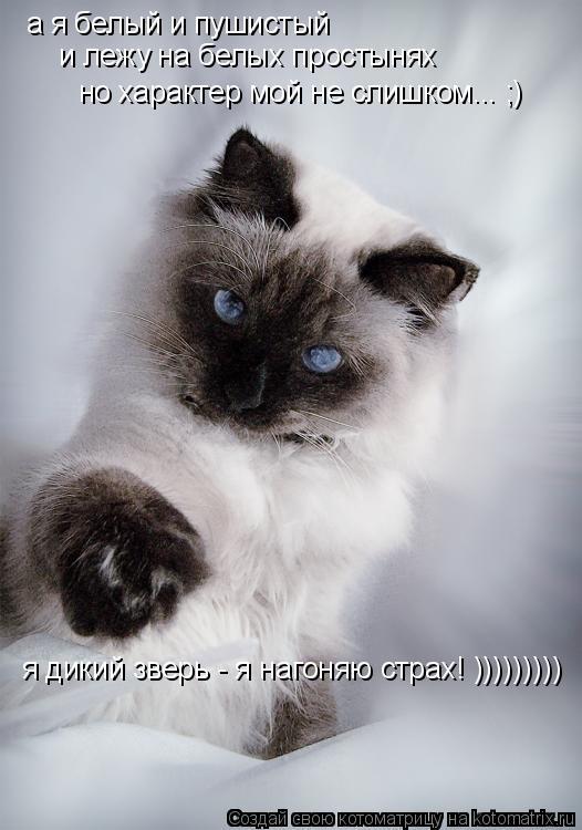Котоматрица: а я белый и пушистый и лежу на белых простынях но характер мой не слишком... ;) я дикий зверь - я нагоняю страх! )))))))))