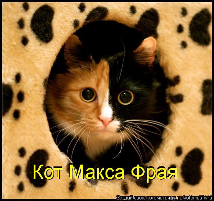 Котоматрица: Кот Макса Фрая Кот Макса Фрая