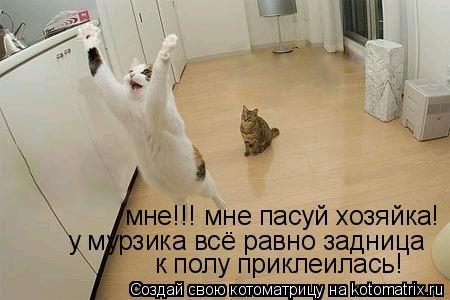 Котоматрица: мне!!! мне пасуй хозяйка! у мурзика всё равно задница к полу приклеилась!