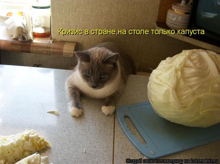 Котоматрица: Кризис в стране,на столе только капуста