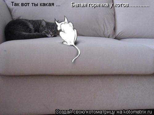 Котоматрица: Так вот ты какая ...  Белая горячка у котов.............