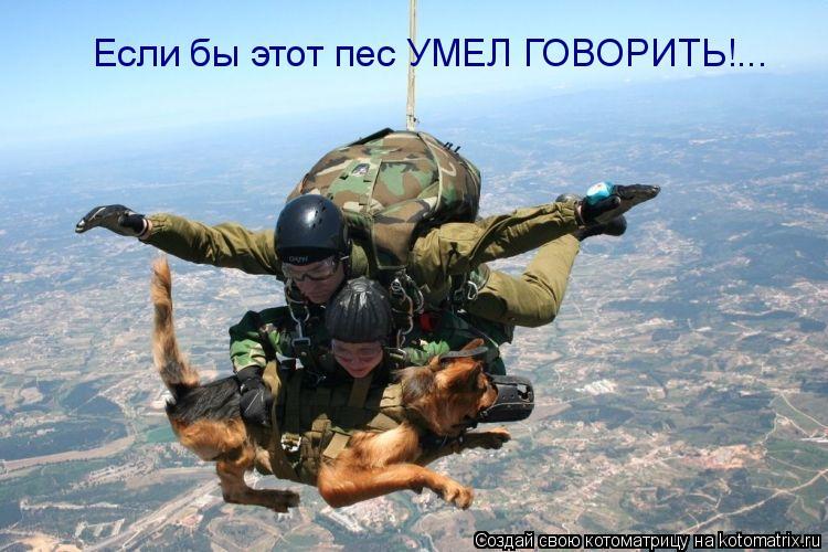 Котоматрица: Если бы этот пес УМЕЛ ГОВОРИТЬ!...