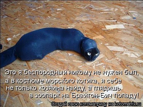 Котоматрица: Это я беспородный никому не нужен был, а в костюме морского котика, я себе  не только хозяина найду, а глядишь  в зоопарк на Брайтон-Бич попад
