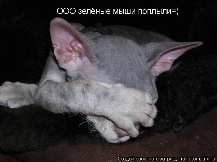 Котоматрица: ООО зелёные мыши поплыли=(