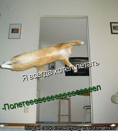 Котоматрица: Я всегда хотел летать Я всегда хотел летать -Полетееееееееееееееееел