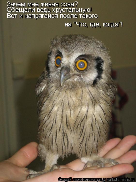 """Котоматрица: Зачем мне живая сова?  Обещали ведь хрустальную! Вот и напрягайся после такого на """"Что, где, когда""""!"""