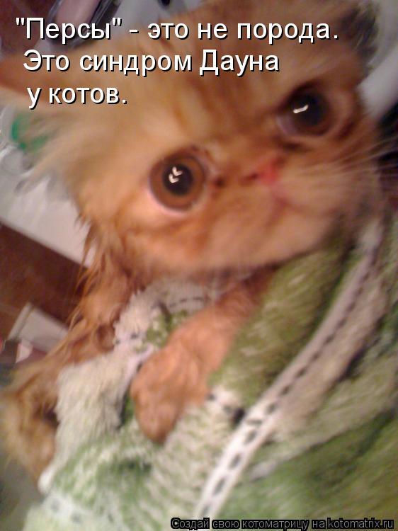 """Котоматрица: """"Персы"""" - это не порода. Это синдром Дауна у котов."""
