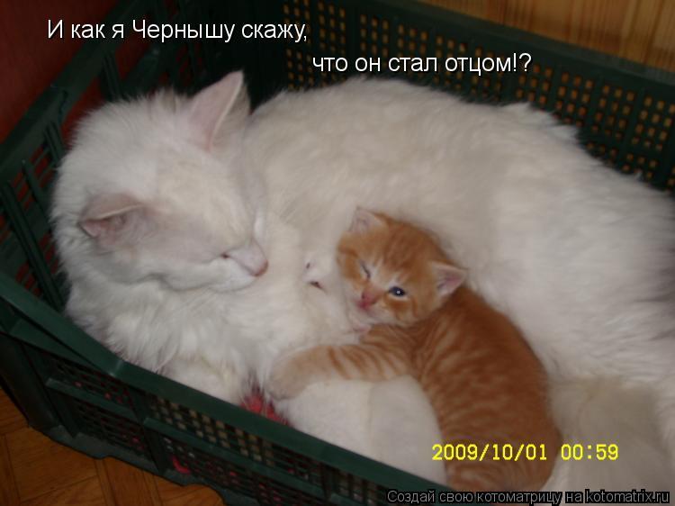 Котоматрица: И как я Чернышу скажу,  что он стал отцом!?