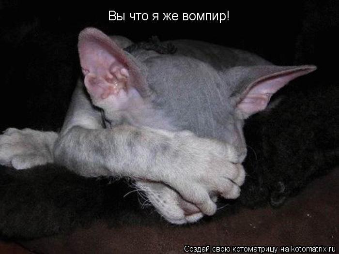 Котоматрица: Вы что я же вомпир!