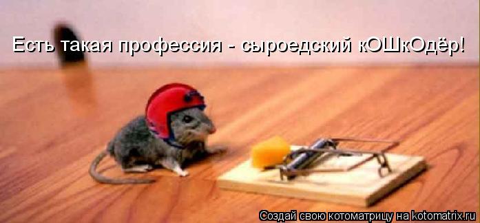 Котоматрица: Есть такая профессия - сыроедский кОШкОдёр!