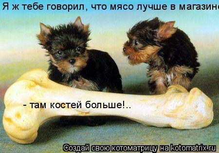 Котоматрица: Я ж тебе говорил, что мясо лучше в магазине   - там костей больше!..