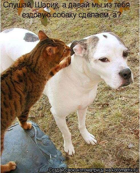 Котоматрица: Слушай, Шарик, а давай мы из тебя ездовую собаку сделаем, а?