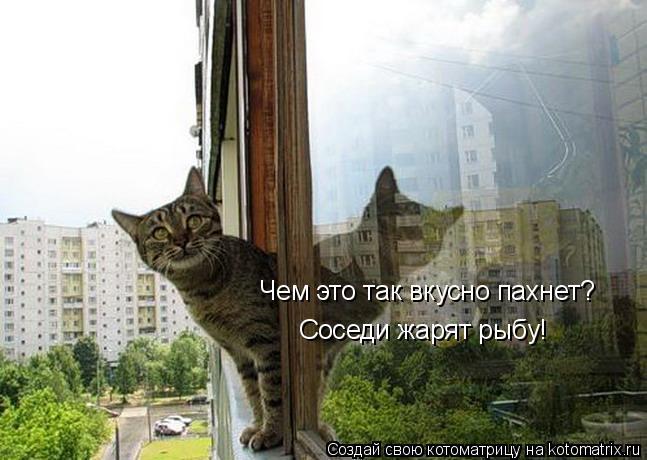 Котоматрица: Чем это так вкусно пахнет? Соседи жарят рыбу!